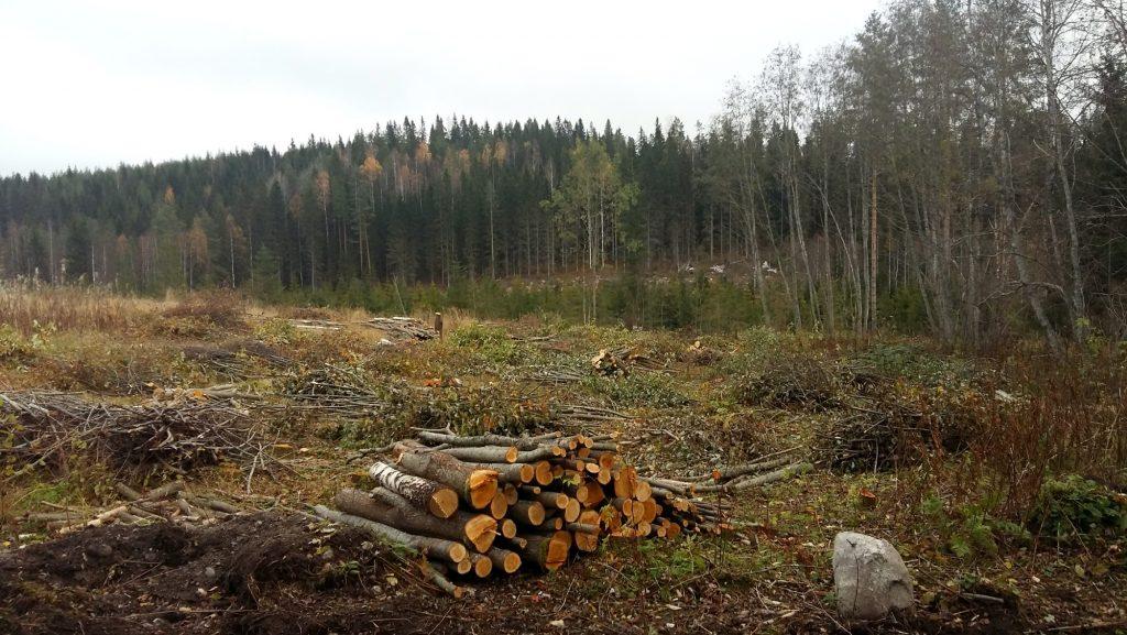 puiden kaato vanhalta pellolta