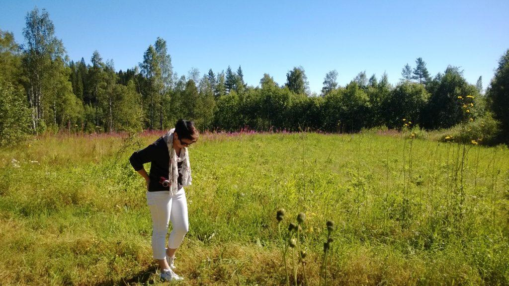 kesäinen pelto