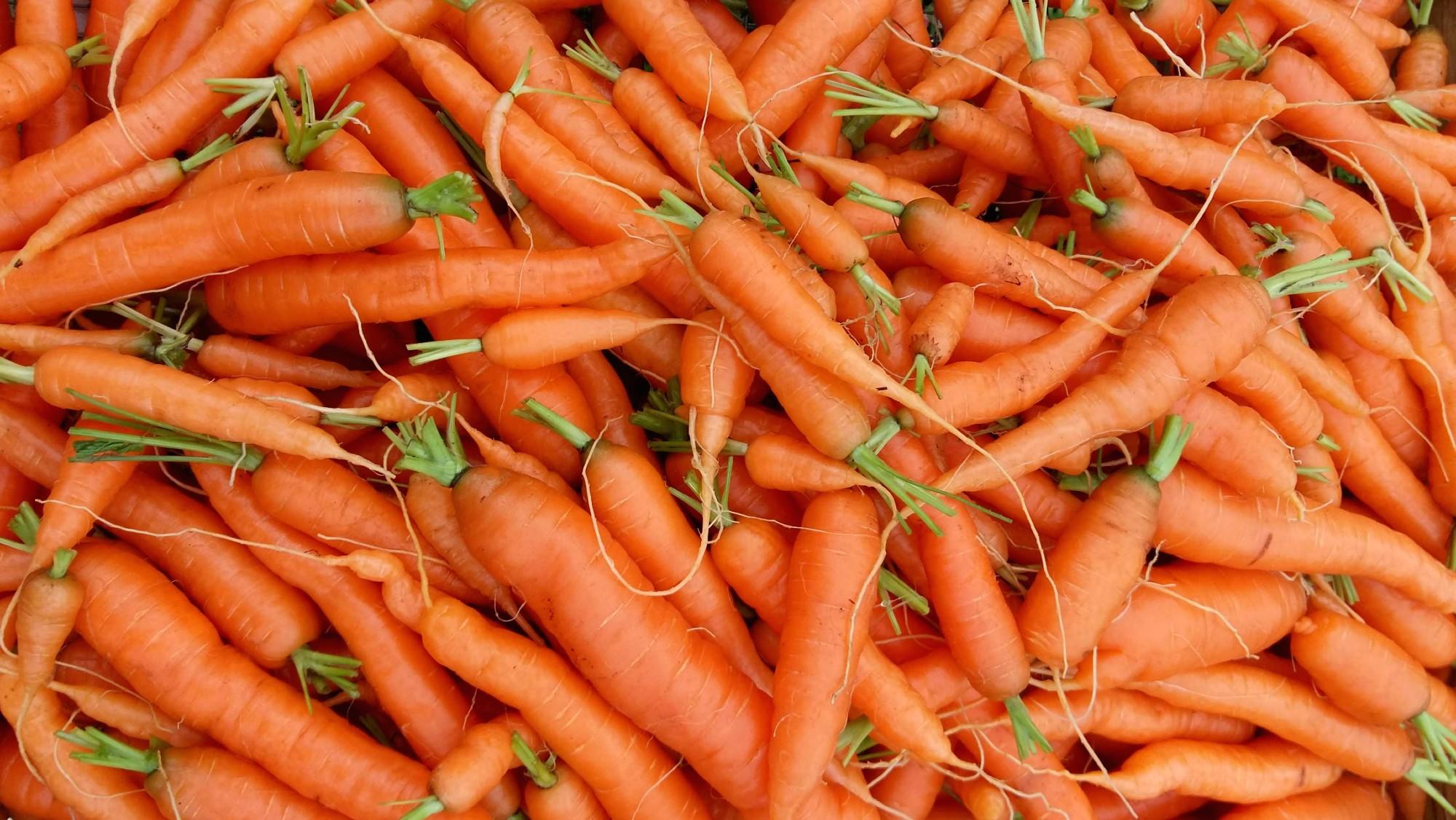 Porkkana
