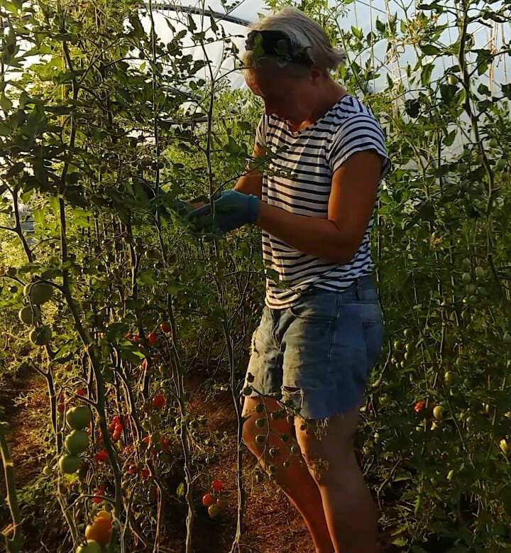tomaatteja isossa tunnelissa