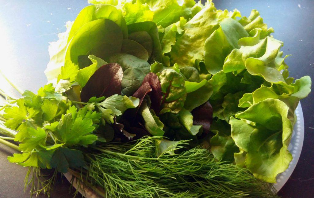 kotimainen salaatti, tilli, persilja