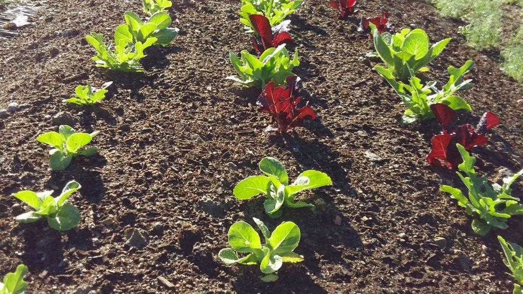 salaatin kasvatus