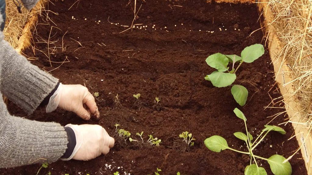Taimien istuttaminen