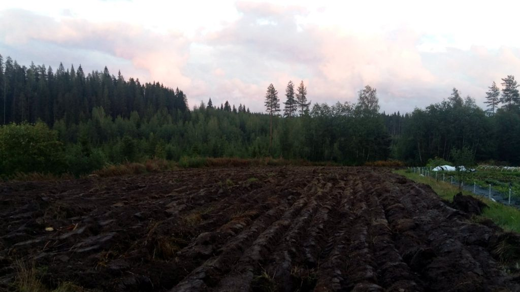 kynnetty pelto Puskasta pelloksi - vanhan pellon kunnostus