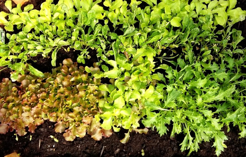 hajakylvetty salaatti