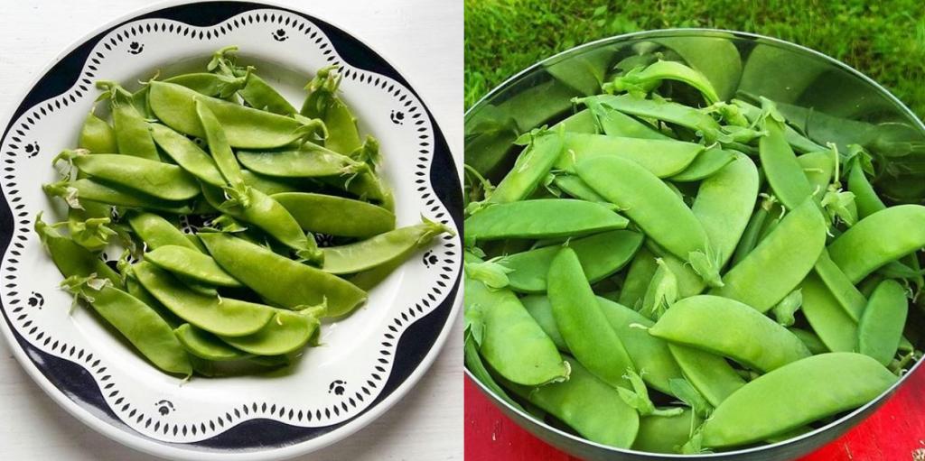 salaattiherne